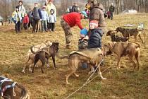 Musheři se svými psy v Čisté u Horek.