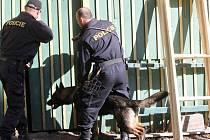 Z výcviku policejních psů na střelnici pod Zebínem.