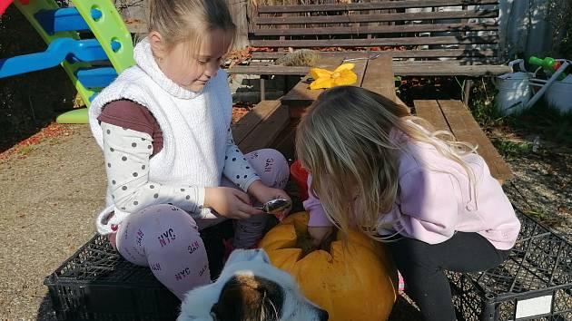 Martina Šepsová ze Staré Paky nám poslala fotografie, jak spolu s dcerkami vydlabávaly a vyřezávaly dýni. Ta jim nyní zdobí zahrádku a to hlavně večer, když v ní zapálí svíčku.