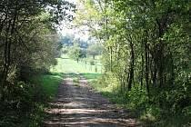 Cyklostezka má vést v aleji pod Zebínem nedaleko Cidliny až k železnické pile.