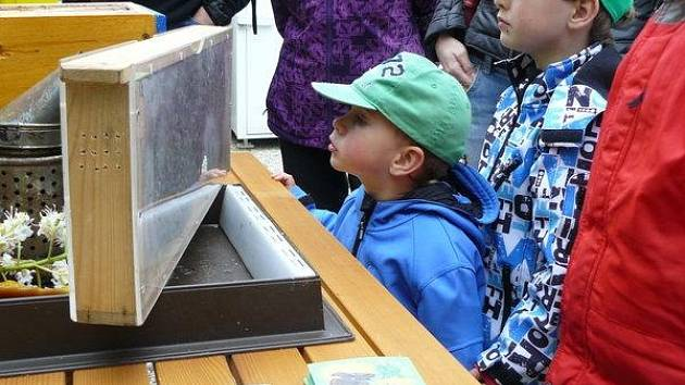 Živé včely se v proskleném úlu těší na každé výstavě velké pozornosti především dětí.