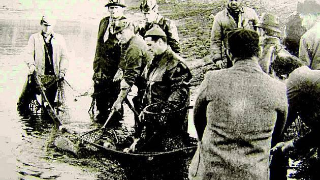 Výlov rybníka Kníže před čtyřiceti lety.