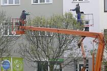 Zdobení stromů světelnými řetězci.