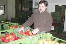 Ze skladu ovoce akciové společnosti Lužanská zemědělská.