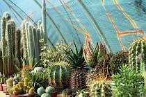Výstava kaktusů na Valdštejnově náměstí