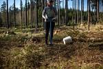 V době koronaviru je větší zájem o brigády v Lesích ČR, kde studenti vysazují nové stromky a uklízejí.