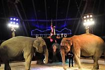 Z cirkusu Humberto.