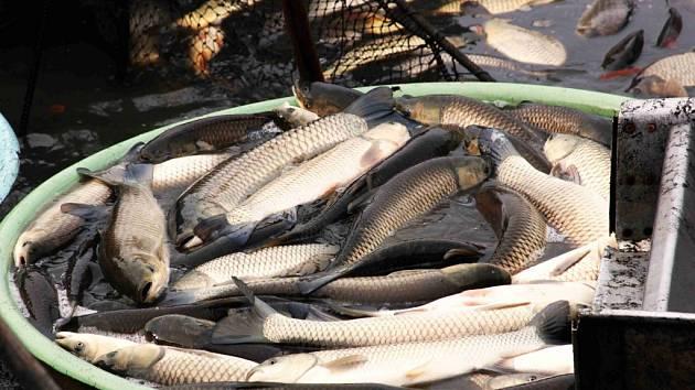 páchnoucí rybařeníSeznamovací tipy v urdu jazyce