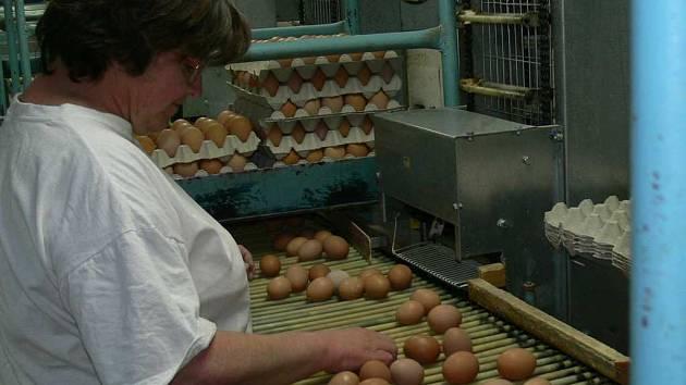 Třídění vajec v MAVE Soběraz.