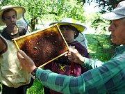 Včelnice mladých včelařů v ZŠ ve Veliši.