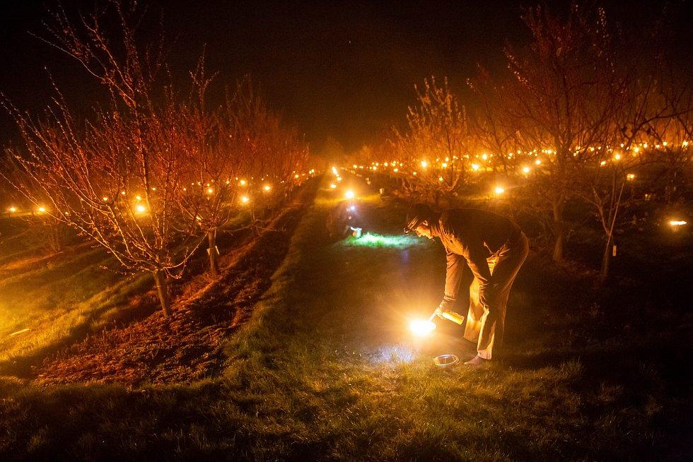 Pěstitelé v Holovousích museli zapálit parafínové svíce, aby uchránili úrodu ovocných stromů. Teploty pod nulou by nenávratně poškodily květy. V sadech tak zapálili stovky svící.