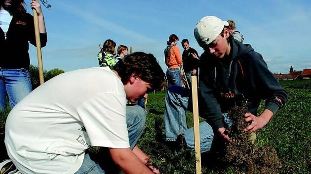 Žáci chomutické základní školy při sázení stromků.