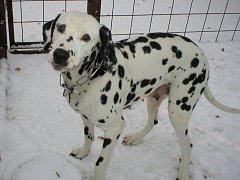 Ilustrační foto - i krásný pes s rodokmenem může skončit v útulku.