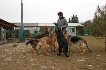 Z jičínské záchytné stanice pro psy.