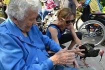 Výlet pro seniory do Zoo.