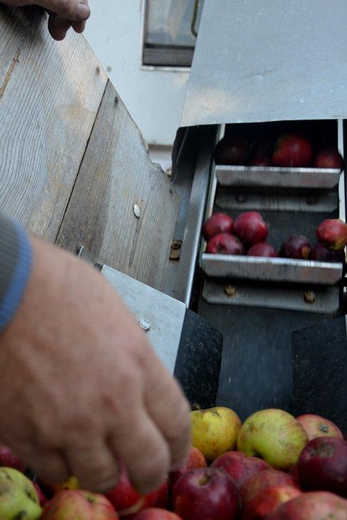 Moštovny už zpracovávají letošní skromnou úrodu.