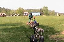 Projížďky psích spřežení na Pecce.