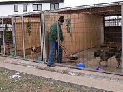 Pracovník Technických služeb Jan Kaňka teoreticky předvádí metodu odchytu nebezpečných psů pomocí smyčky na tyči.
