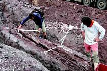 Nález zkamenělého stromu (araukaritu) při stavbě novopackého Lidlu.