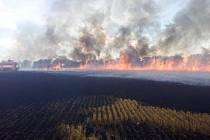 Požár pole s obilím u Hubálova.