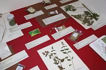 Výstava v jičínském muzeu.