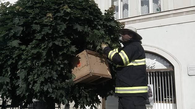 Jiřího z Poděbrad. Včelstvo si vybralo k sednutí jeden z javorů poblíž cukrárny.