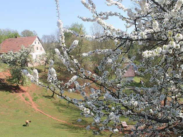 Duben v květu, nebo květen v dubnu? Okolí Štěpanic na Novopacku.
