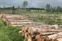 stromy poškozené kůrovcem