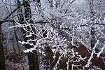 Oblast kolem Hojné Vody v Novohradských horách ovládla o víkendu pravá zima.