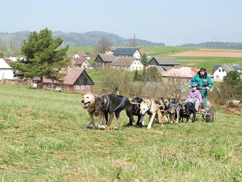 Jízdy musherů v Čisté u Horek.