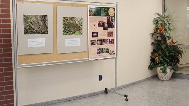 Výstava snímků plazů a obojživelníků.