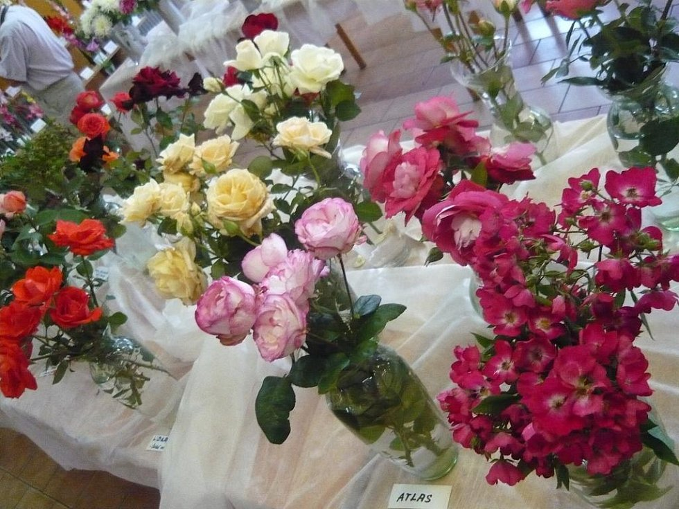 Základní organizace Českého zahrádkářského svazu připravila již 9. ročník výstavy jiřin, růží, mečíků a zeleniny.
