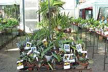 Chotečská výstava květin.