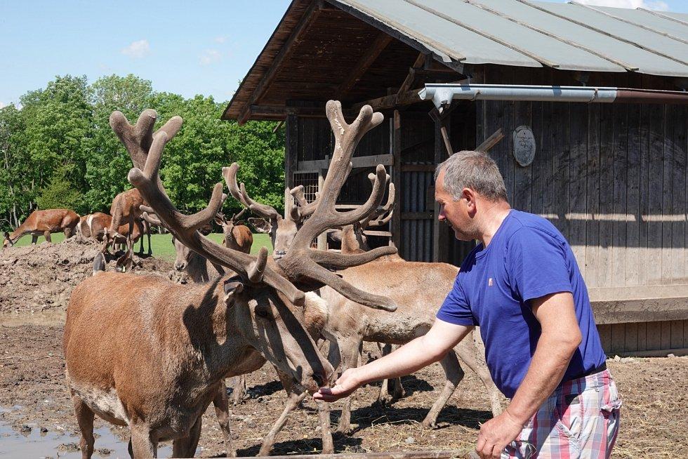 Stanislav Nýdrle z Úlibic u Jičína se věnuje chovu jelenů, muflonů a laní.