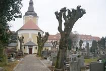 Ořez stromů na jičínském hřbitově.