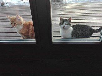 Kočičí nalezenci - chcete je?