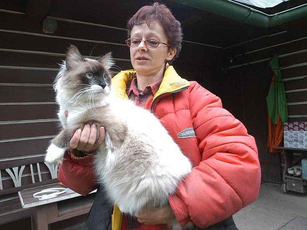 Monika Jenešová s jednou ze svých čtyř sibiřských koček.