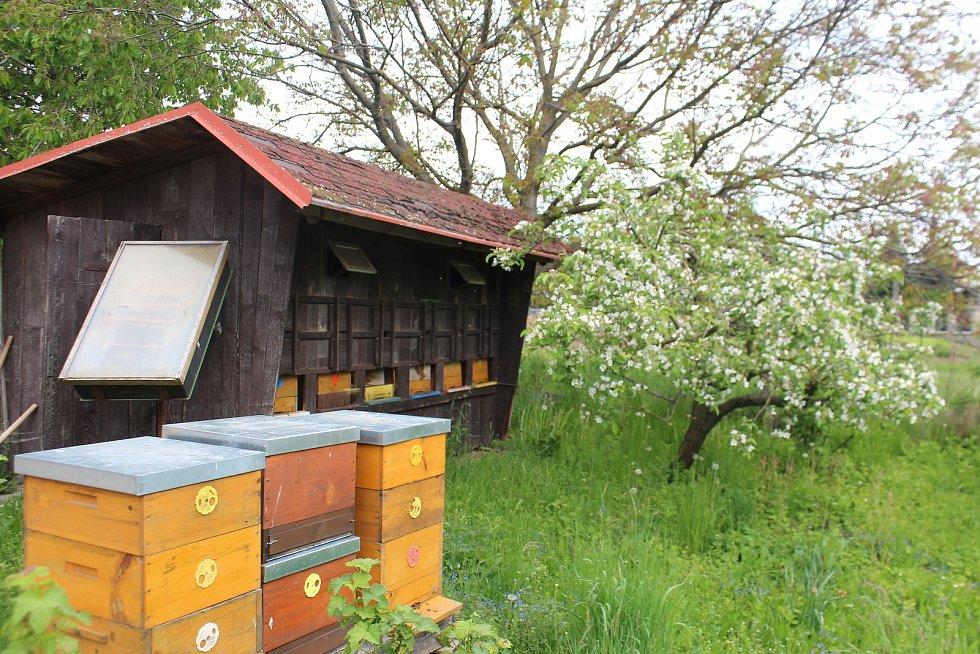 Vinice bude prospěšná také pro životní prostředí, hlavně pro včely.