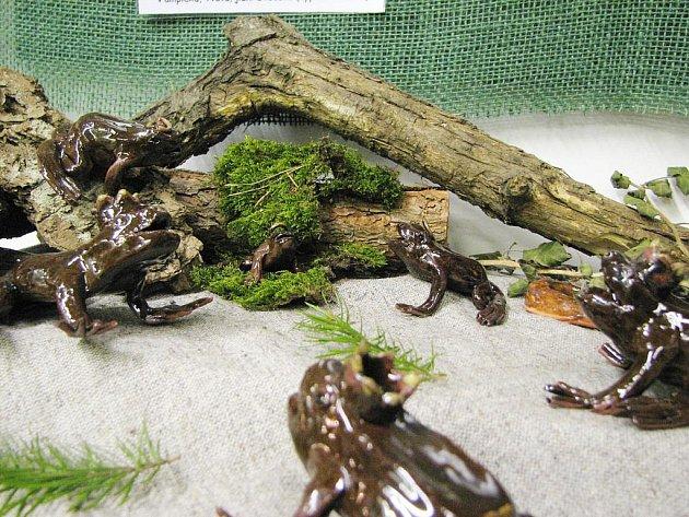 Žabí betlém.