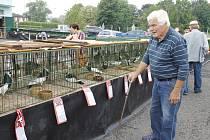 Na tradiční chovatelské výstavě bylo možné si prohlédnout desítky králíků, holubů a různých druhů drůbeže.