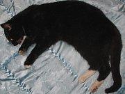 VALDEMAR KOSTKA nakonec za utýrání kočky dostal trest veřejně prospěšných prací a peněžitou pokutou.