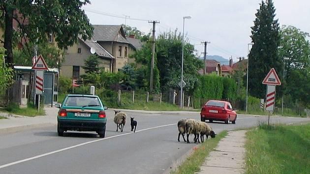 Nebezpečí hrozí nejen zvířatům, ale i projíždějícím vozidlům.