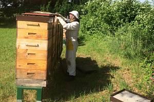 Oblastní charita Jičín - chov včel.