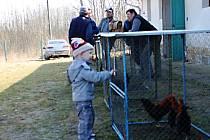 Z jarní vysokoveselské chovatelské výstavy.