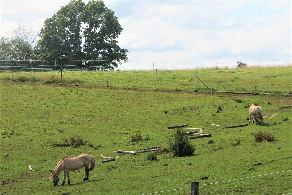 Fjordský kůň je jedno z nejčistších plemen na světě. Jeho podoba se téměř nezměnila od dob, kdy jej chovali skandinávští Vikingové. V Česku jej nyní chová jen málo lidí, hřebčín ve Staré Pace je jediný svého druhu u nás.