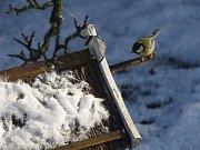 Sčítání ptáků na krmítkách.