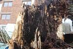 Pamětní třistaletá lípa v Jivanech u Libuně podlehla náporu silného větru. Majitel nemovitosti vyvázl o vlásek, strom pohřbil jeho auto, ve kterém přijel z nákupu. Majitelé léta poukazovali na špatný stav stromu, do jehož koruny ale nemohli zasahovat.