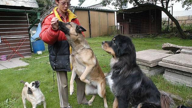Pro Moniku Jenešovou jsou psi opravdovými kamarády.