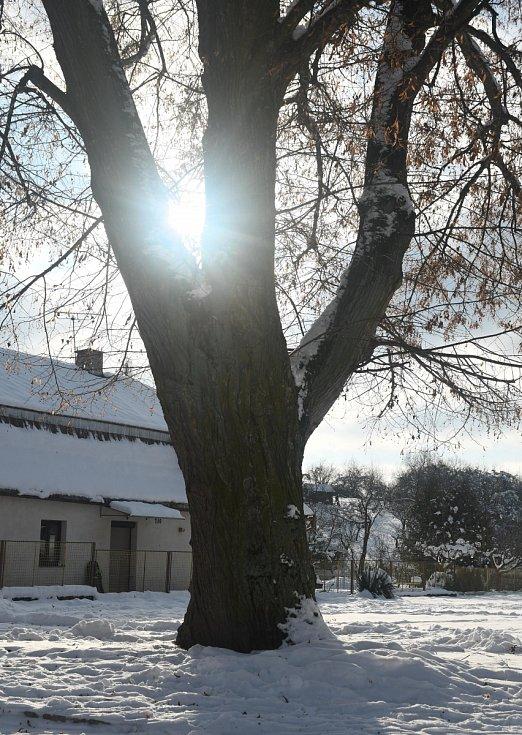 Zimní den v Lužanech.