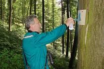 V rámci mapování ornitologové značí stromy s výskytem dutin, které po dohodě zůstanou nepokáceny.